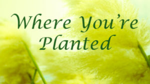 Where You're Planted – Part 2